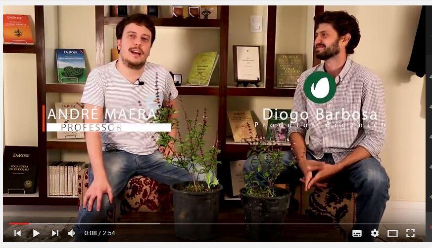 Conheça o manjericão Tulsi, bate papo com André Mafra e Diogo Barbosa